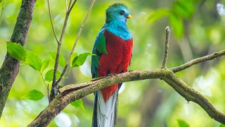 Costa Rica's Wildlife