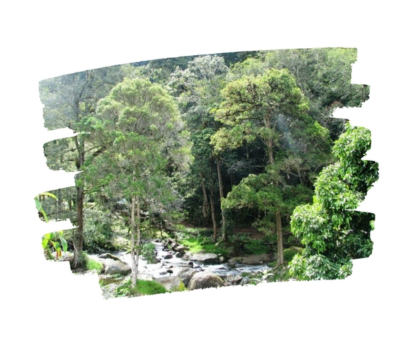The Southern Cordillera